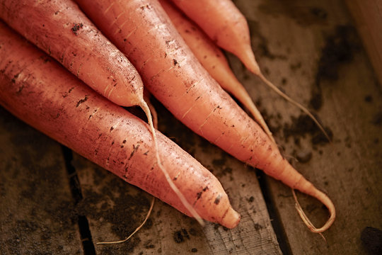 Still life close up fresh, organic, healthy, rustic, dirty orange carrots