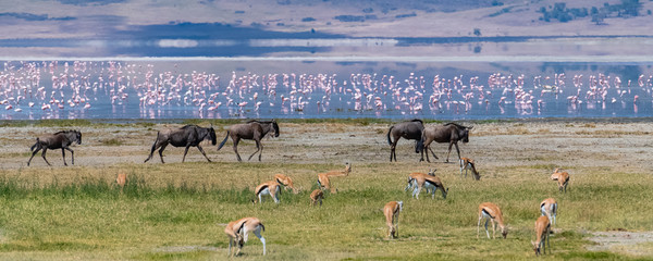 Tanzania, view of the Ngorongoro crater, beautiful landscape with different animals living together, gnus, antelopes, flamingos