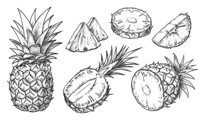 Sketch of pineapple. Isolated hand drawn ananas