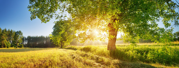 Foto op Canvas Bomen tree foliage in beautiful morning light with sunlight in summer
