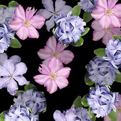 Wall Mural - Beautiful floral background of clematis and hyacinth. Isolated