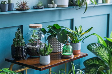 Stylish living room interior filled a lot of beautiful plants, cacti in different design pots on...