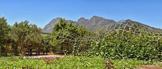 Beautiful Garden - Babylonstoren - South Africa