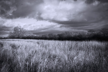 Wall Murals Gray Moody Black And White Landscape under a Dramatic Sky.