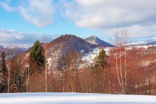 beautiful winter landscape in mountains. afternoon scenery of Uzhanian National Nature Park, ukraine. mixed forest on snow covered slopes. dramatic weather with cloudy sky