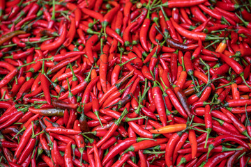 Canvas Prints Hot chili peppers Red hot Chillies on sale