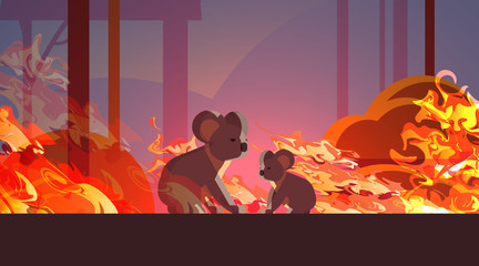 koalas escaping from fires in australia animals dying in wildfire bushfire natural disaster concept intense orange flames horizontal vector illustration