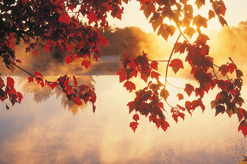 Wall Murals Melon Sunrise Through Autumn Leaves, New England