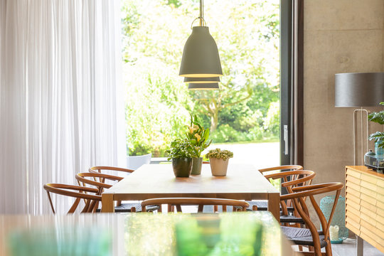 Plants on table below pendant lights in modern dining room