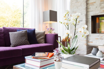 Books, succulents and orchid on living room coffee table