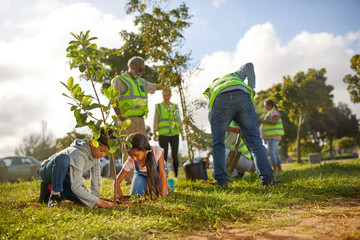 Volunteers planting trees in sunny park