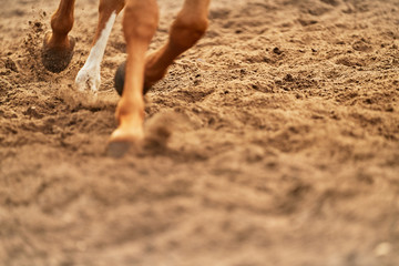 Close up horse hooves in dirt