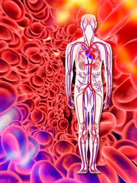 Human circulatory system, artwork