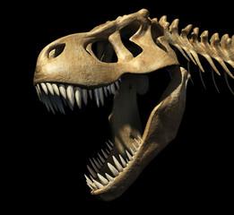 Tyrannosaurus rex skull, illustration