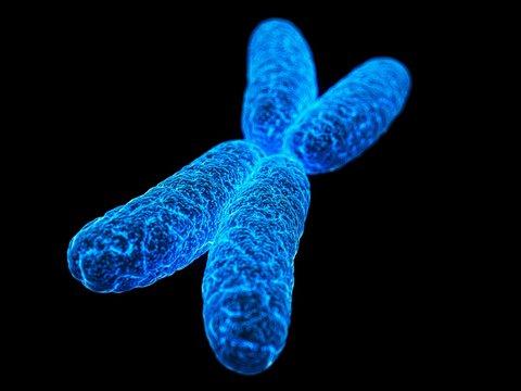 X chromosome, illustration