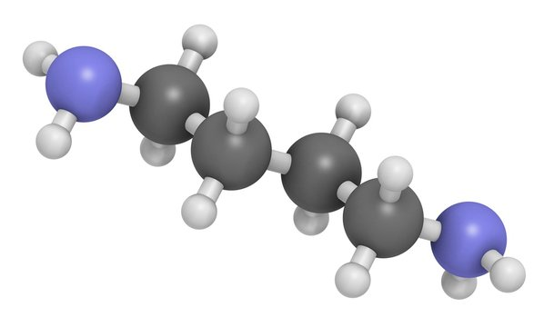 Putrescine foul smelling molecule