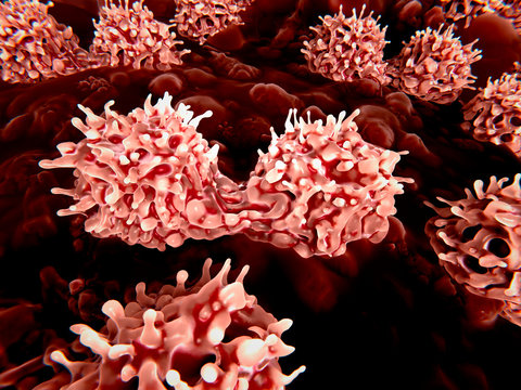 Stem cells dividing, illustration