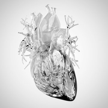 Human heart rendered in glass