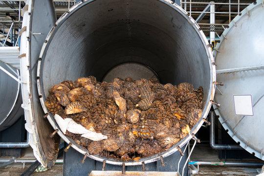 El agave está cocido en los hornos de la fabrica.