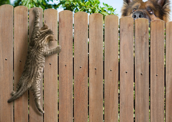Papier Peint - Funny kitten hanging on fence and big dog behind