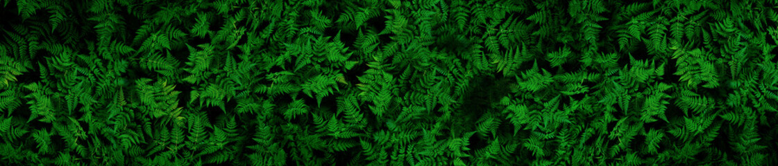 Very detailed and natural, lush, green ferns background Fototapete