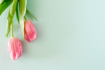 Spoed Foto op Canvas Tulp ピンクのチューリップとパステルカラーの背景