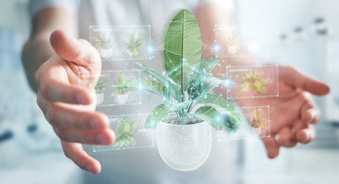 Man holding and touching holographic projection of a plant with digital analysis 3D rendering