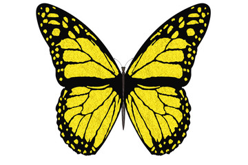 Farfalla colorata vola con le ali aperte su sfondo bianco..