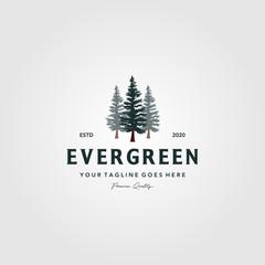 pine tree vintage logo evergreen spruce fir vector emblem illustration design