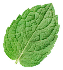 Mint leaves isolated on white background. Mint clipping path. Food photography