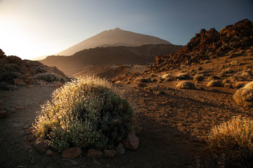 Canvas Prints Chocolate brown Teide volcano national park spain