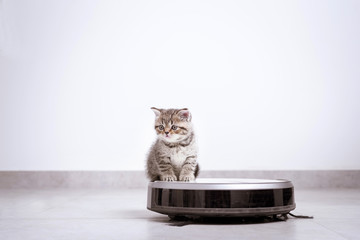 a gray kitten with robot vacuum cleaner
