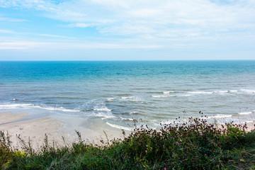 Morze Bałtyckie plaża rośliny fale