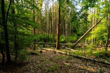 Las powalone drzewa pnie