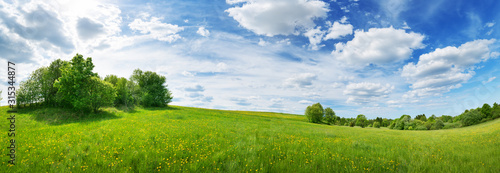 Wall mural Green field with white and yellow dandelions outdoors in nature in summer