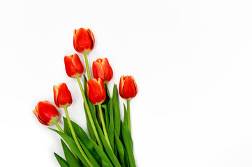 Fotobehang Tulp Bouquet of red Spring tulips with isolated on white background.Top horizontal view copyspace. Woman's holiday 8 march