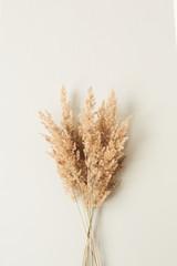 Obraz Reeds foliage branches bouquet on neutral pastel beige background. - fototapety do salonu