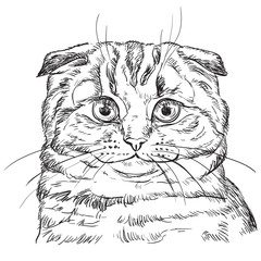 Door stickers Hand drawn Sketch of animals Vector hand drawing cat 4