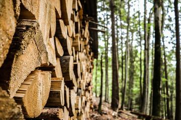 Réserve de bois dans la forêt Fotobehang