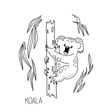 Hand drawn vector  illustration Koala, tree, leaves, lettering isolated on white background. Wild life and fauna. Best for coloring books, cards, posters, sites, stickers, magazines, print, banner.