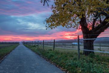 Rheinhessen im Sonnenaufgang
