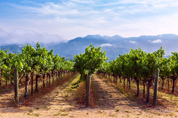 Photo on textile frame Vineyard Rows of grapes growing at a vineyard in Napa Valley, California