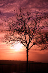 Poster Crimson Sunset tree
