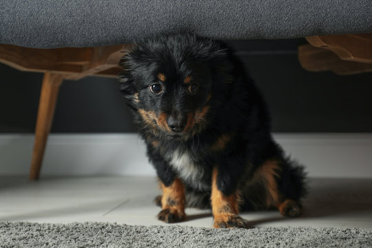 Stressed dog hiding under sofa. Domestic violence against pets