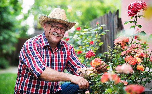 Gardening. Man working in the garden. Hobbies and leisure