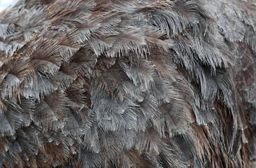Zelfklevend Fotobehang Struisvogel ostrich feathers on ostrich close background