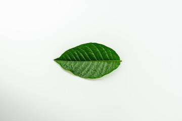 Fototapete - green leaves on white background.