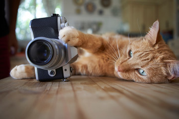 Ginger cat lying on kitche table, holding camera