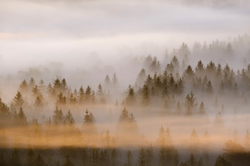 Germany, Bavaria, Aerial view of thick morning fog shrouding forest in Isarauen nature reserve