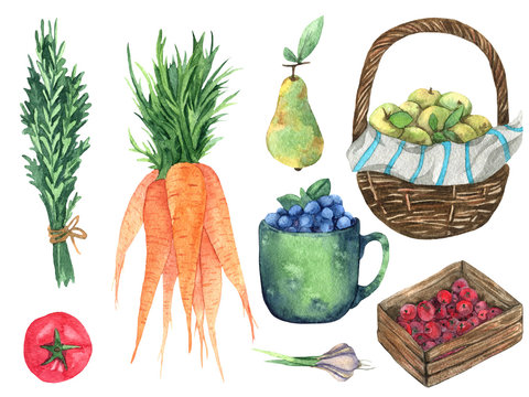 Gardening elements watercolor illustration. Hand drawn vegetables, fruits. Watercolor carrot, apples, rosemary, blueberries, tomato, pear, garlic isolated on white background.